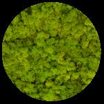 Preserved Moss